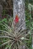 Flower-Corkscrew Swamp